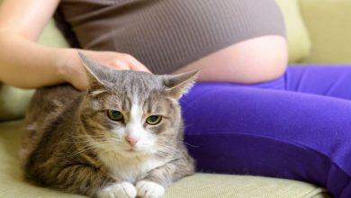 مرض القطط للحامل